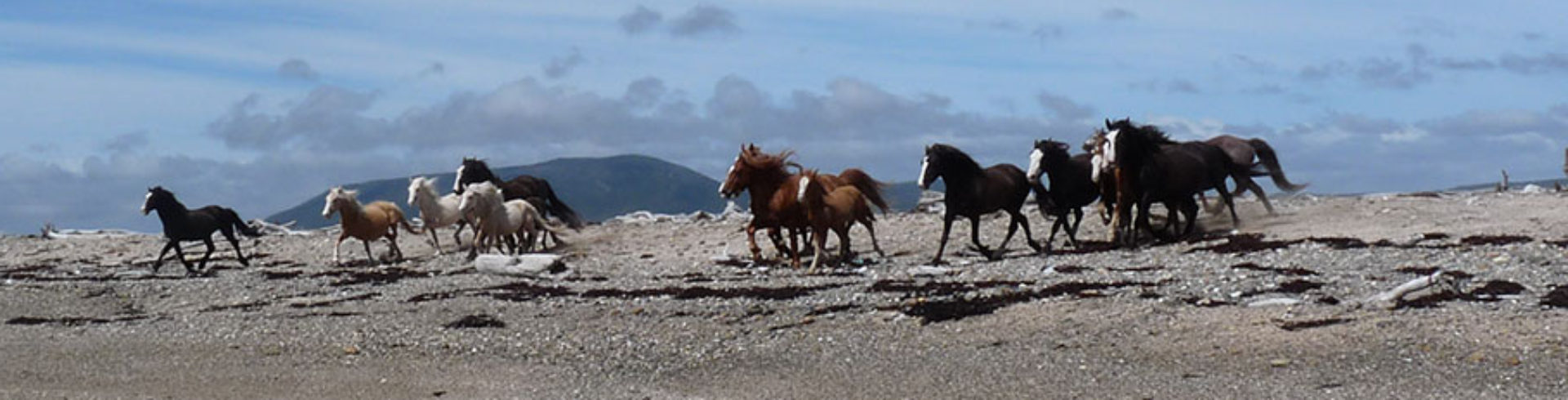 Centro Hípico Ushuaia
